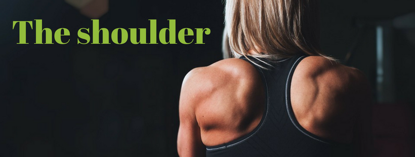 shoulder, shoulder mechanics, shoulder anatomy