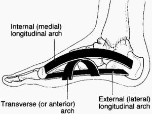 foot anatomy, metatarsal arch