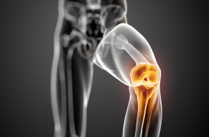 Knee-Joint-highlighted_cropped