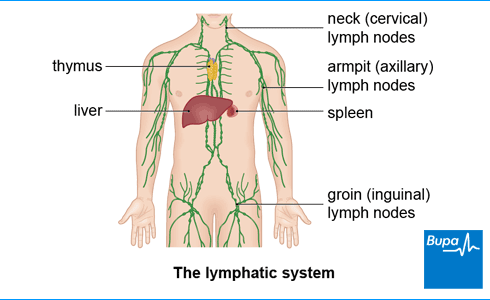 Lymphatic Drainage Massage: Feel what you are missing