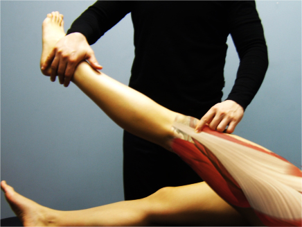 Combining Active Release Techniques with Functional Anatomy Palpation