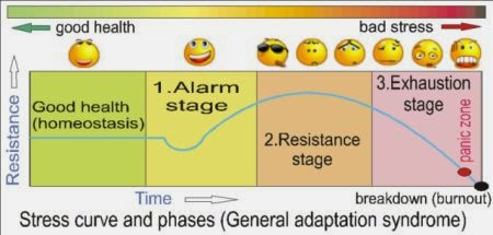 Stress curve and phases 5