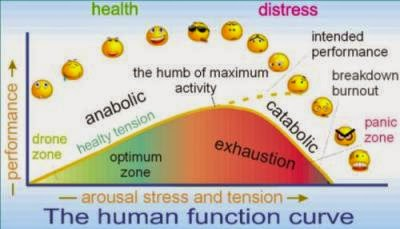 The human function curve 4.1