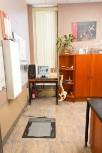 Ottawa Orthotics, orthotics, kinesiology, foot pain, heel pain