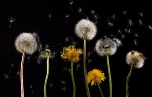 pollen, allergies spring