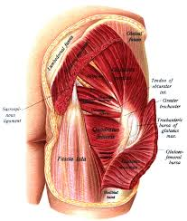 piriformis syndrome, treatment for piriformis syndrome, muscle for hip, massage for piriformis, chiropractic for piriformis