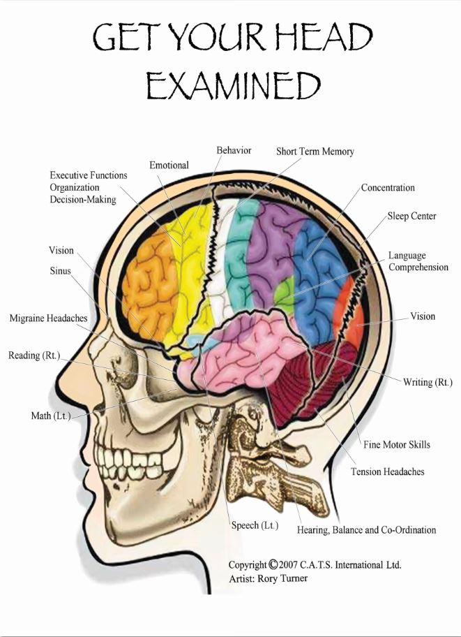 cranial adjusting turner style, get your head examined, concussion treatment, brain lobes, brain function